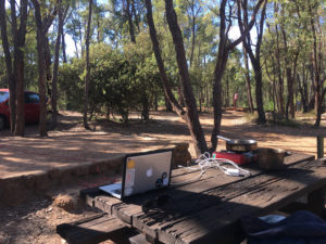 my forest office